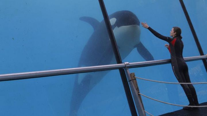The Marineland of Antibes in the film rust and bone - Movie Outfits and Products