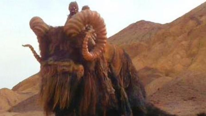 Fashion Trends 2021: The costume (version dog) of a Bantha in Star Wars IV : A new hope