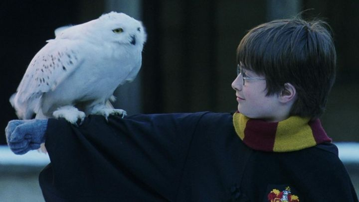 The scarf Gryffindor worn by Harry Potter (Daniel Radcliffe) in Harry Potter and the sorcerer's stone movie
